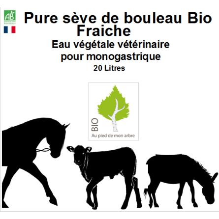 Sève de bouleau fraiche bio pour animaux domestiques en bidon de 20 Litres